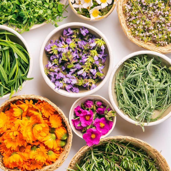 extractos de plantas para tus maceraciones