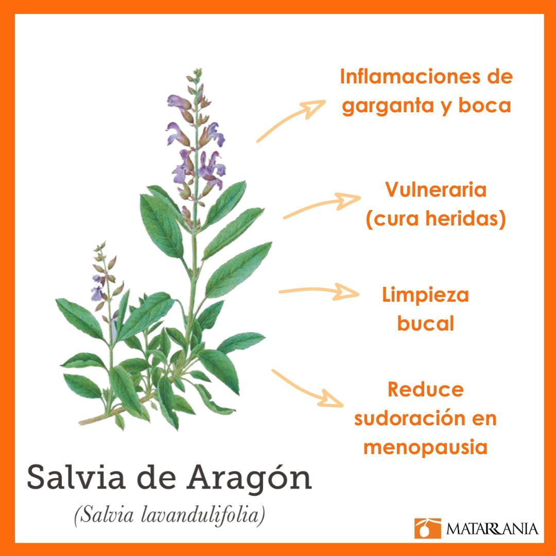 Propiedades de la Salvia de Aragón