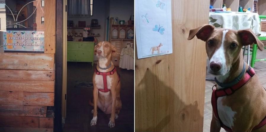 El perro de Celia, Bones, en la tienda 4eco Pinto