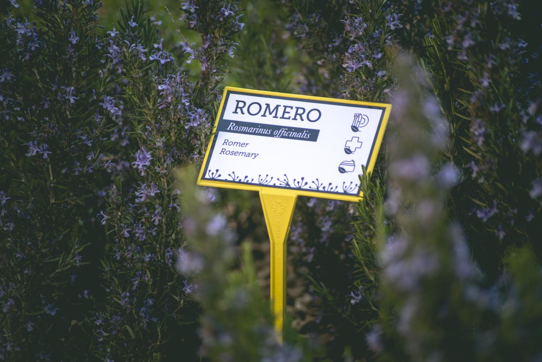 jardin botanico flora matarrania